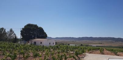 Vinranker - og huset til Katherine og Harald når de er hjemme på gården