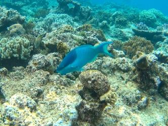 Great Barrier Reef 11