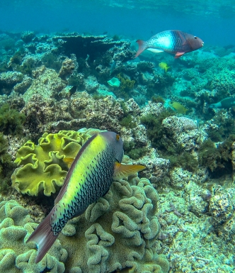 Great Barrier Reef 14
