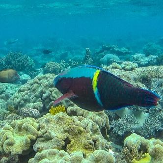 Great Barrier Reef 16