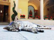 Ethvert kloster har en katt - eller ti - og de lever nok i god harmoni med seg selv og omverdenen.. i alle fall var denne krabaten VELDIG avslappet!